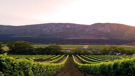 Vines11